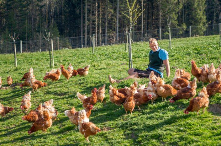 Holzbauer Eier